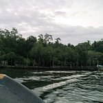 just a random view during the Madu ganga boat safari