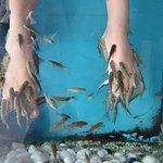 Foto de Spa Aquarium