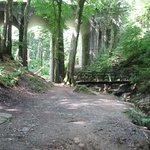 Road bridge over the Glen