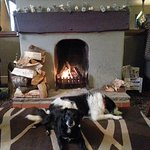 Fantasic Open Fire For the Dogs