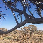 Quivertree Forest and Giant's Playground Foto