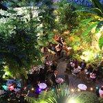 Le jardin de l' hôtel Eldorado-Bistrot des dames la nuit
