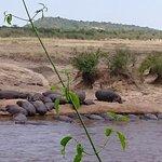 Foto de Río Mara