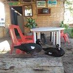 pareja de patos esperando que alguien salga de la cocina