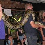 Burmese Python gets some public time