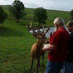 Foto de Red Deer at Rolling Hills Farm