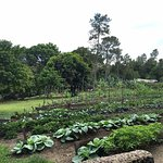 Vegetable & Fruit garden on property used at the restaurant