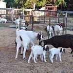 Foto de Rocking MJ Ranch Bed & Breakfast