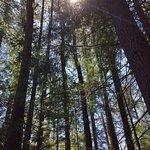 #livingintheforest