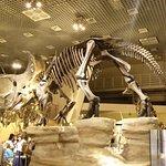 Foto de Museo Nacional de Ciencia