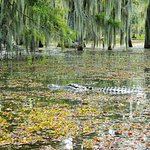 Enough gators but plenty other wildlife to see