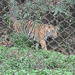 Foto de Himalayan Zoological Park