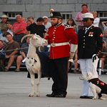 Visit Fort Henry and David the Goat!