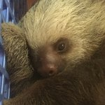 Photo de Sloth Sanctuary of Costa Rica (Aviarios del Caribe)