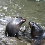 Photo de Ohau Waterfall Walk and Seal Pups