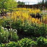 Vacker trädgårdskomposition