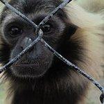 Phnom Tamao Wildlife Rescue Center Foto