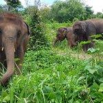 Elephant Rescue Park