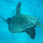 Clear water, beautiful turtle