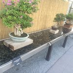 Well done humidity tray for tropical bonsai specimens