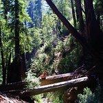 Redwood trees (Hiking)