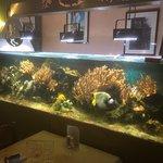 L aquarium du restaurant
