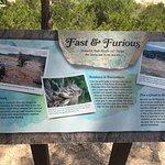 Foto di Pedernales Falls State Park