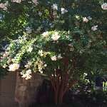 Blooming tree on grounds at The Chanticleer Inn