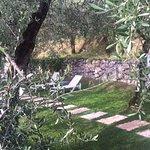 Olivenhain mit Blick auf den Gardasee, mit kleinem Swimming-Pool.