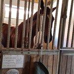 Cavallo campione