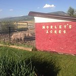 Morley's Acres Farm and Bed & Breakfast Foto