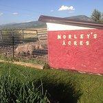 Photo de Morley's Acres Farm and Bed & Breakfast