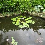 Queen Elizabeth II Botanic Park Foto