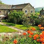 The lovely poppy garden
