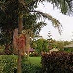 Bougainvillea Safari Lodge Photo