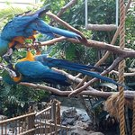 Parrots in the Market Dome