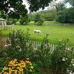 Foto de MeadowLark Farm Bed and Breakfast