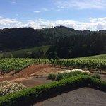 Foto de Winderlea Vineyard and Winery