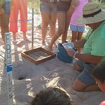 Sea turtle conservationists helping with the hatching , this was right across street from inn