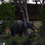 Wilderness Safaris Banoka Bush Camp Foto