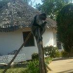 Photo of Chwaka Bay Resort