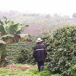 Promenade plantation de café