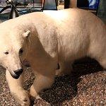 Svalbard Museum Foto