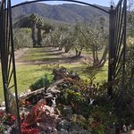 Garden and olive trees