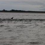 Chanonry Point Photo