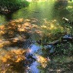Riverdale Farm Campsite Foto