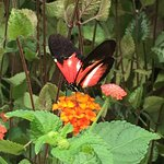 The Original Mackinac Island Butterfly House & Insect World Foto