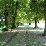 Pleasant avenue of trees at Boughton House