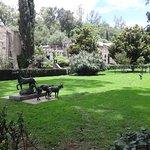 Perros xoloizcuintles en los jardines del Museo Dolores Olmedo.