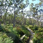 Tilligerry National Park